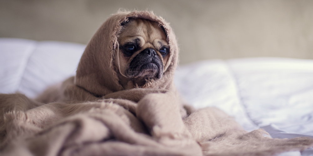 Gaming compliance: a good MLRO makes you as snug as a pug in a rug